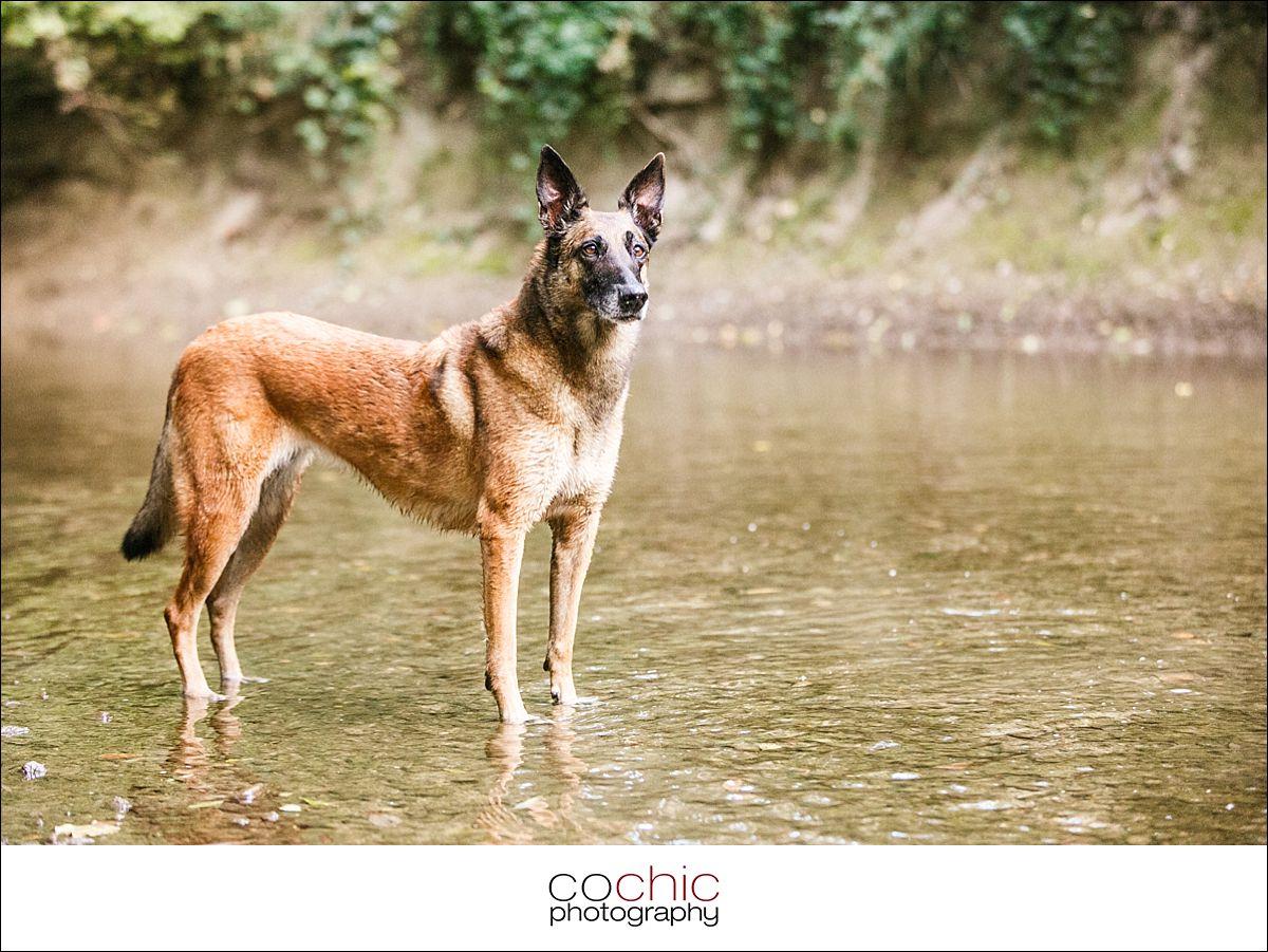 011-portrat-wien-hund-foto-shooting-natur-wiese-wasser-osterreich-cochic-photography-ako_8680